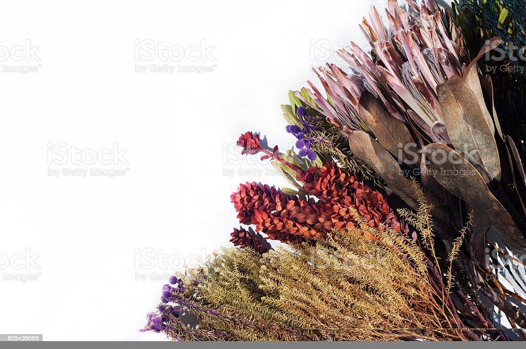Fynbos flowers on white stock photo