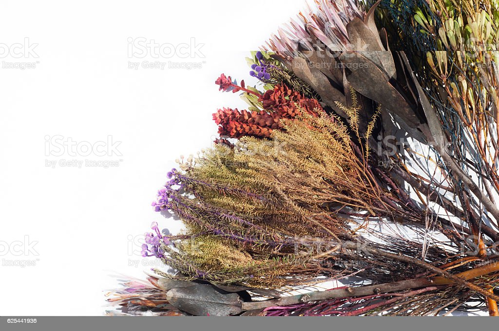 Fynbos from South Africa stock photo