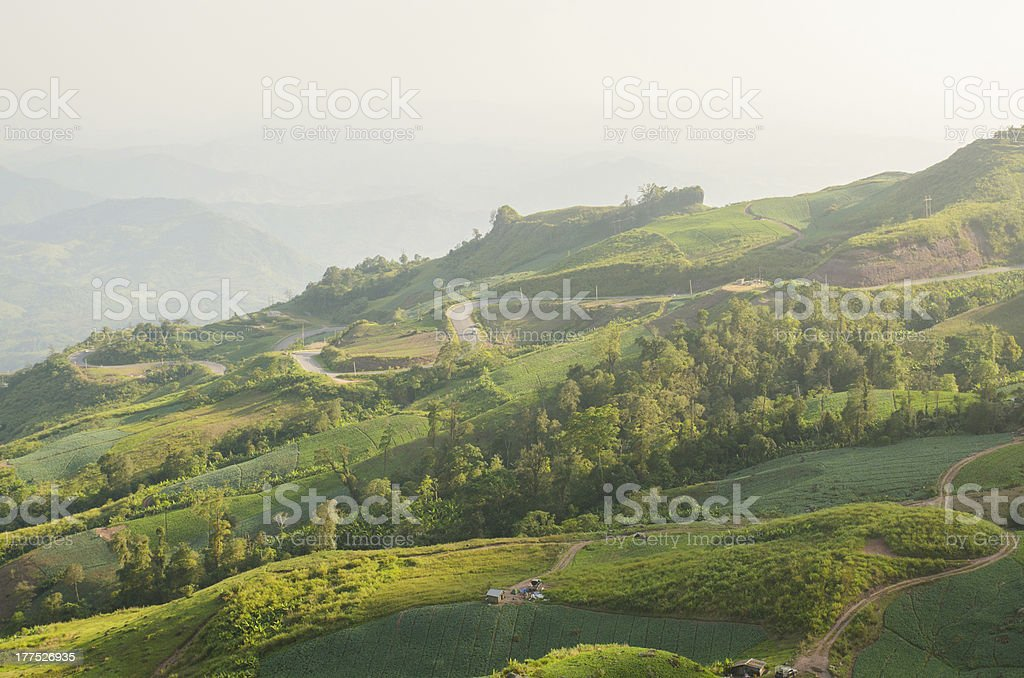 Gabbage Fields at Eastern Mountain of Thailand royalty-free stock photo