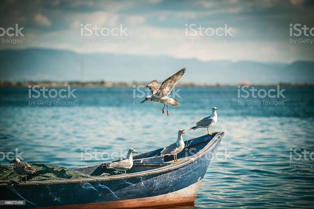 Gabbiani giovani ed adulti sulla barca stock photo
