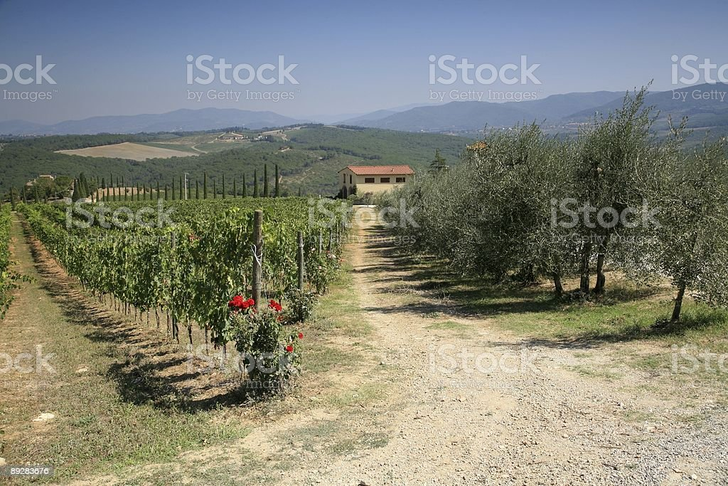 Gabbiani Vineyard royalty-free stock photo