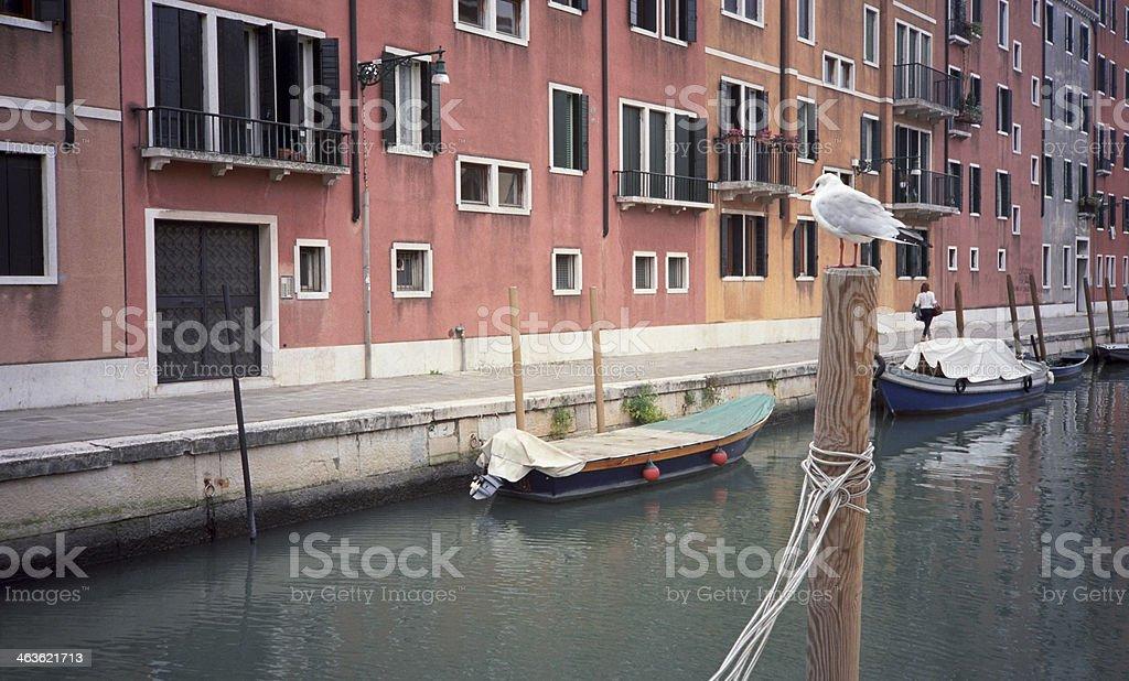Gabbiano a Venezia royalty-free stock photo