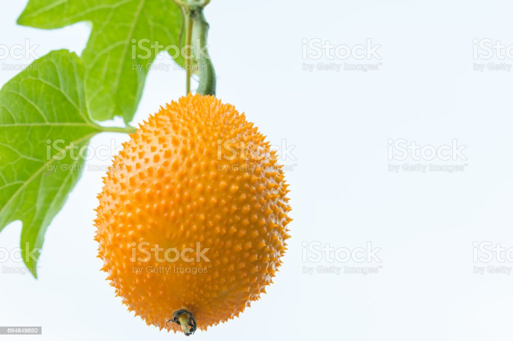 Gac fruit, Baby Jackfruit, Cochinchin Gourd, Spiny Bitter Gourd, Sweet. stock photo