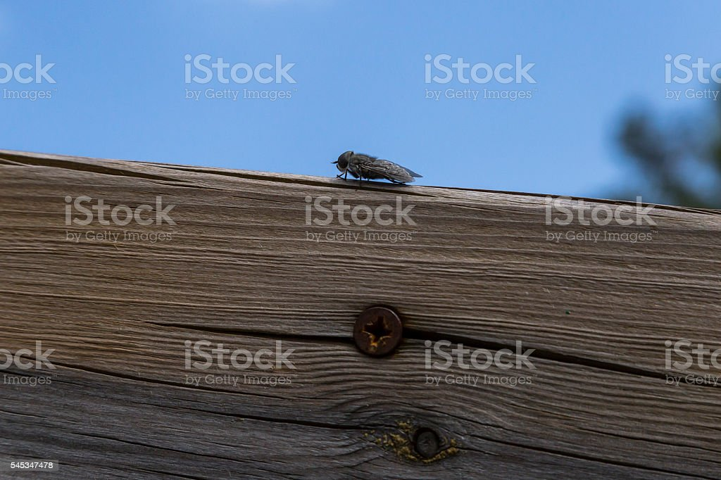 Gadfly rested on a wood stock photo