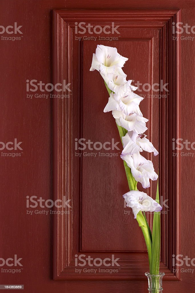 Gadiolas Flower Stem Contrasts Nicely Against This Red Door stock photo