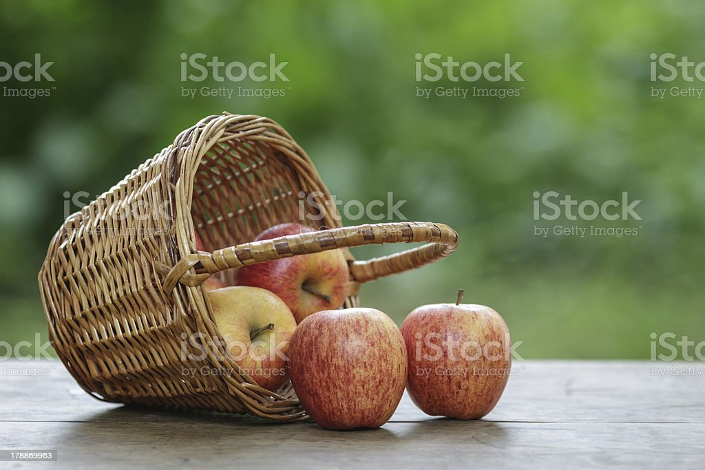 gala apples in a wicker basket stock photo