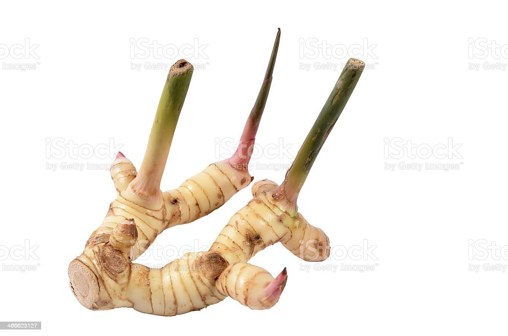 Galangal stock photo