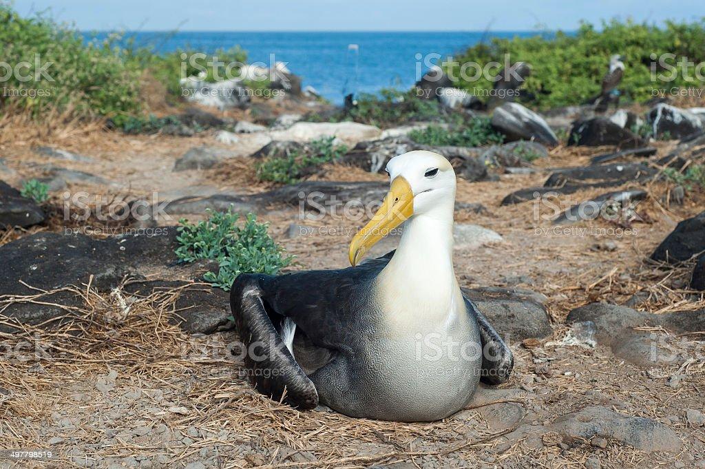 Galapagos Animals stock photo