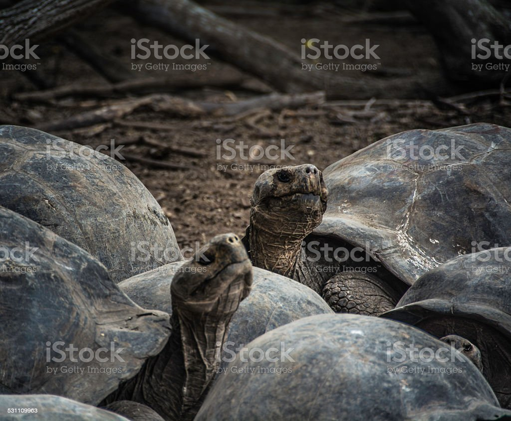 Galapagos stock photo