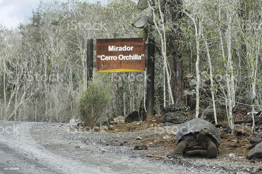 Galapagos Tortoise royalty-free stock photo