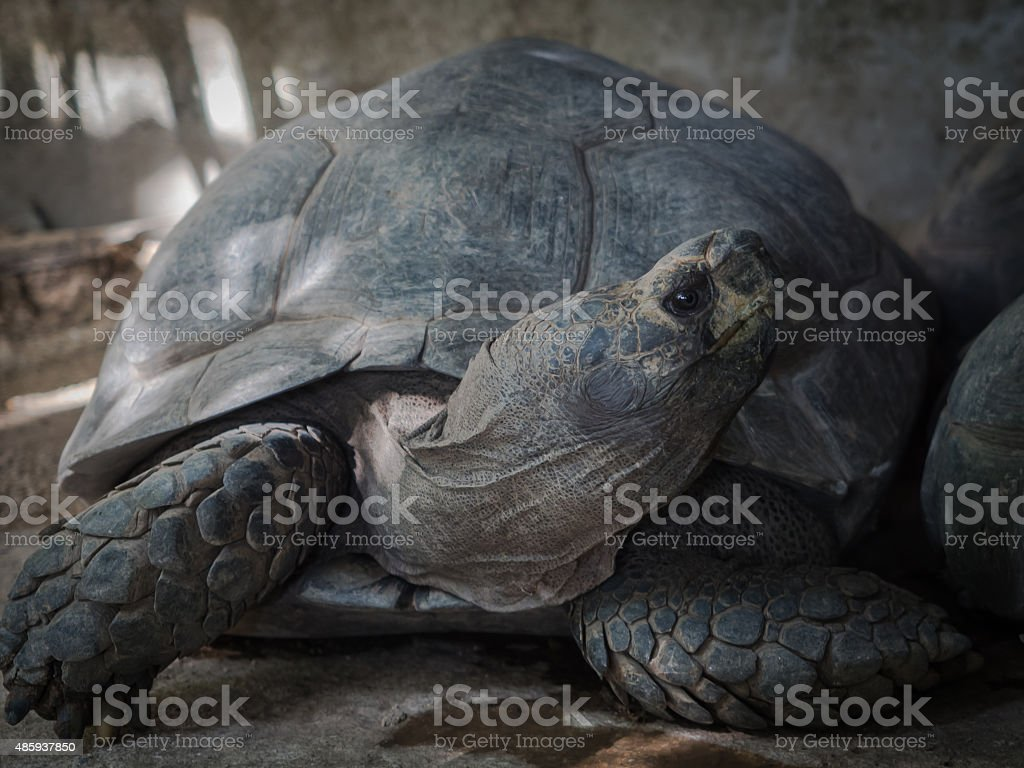 Galapagos Turtle stock photo