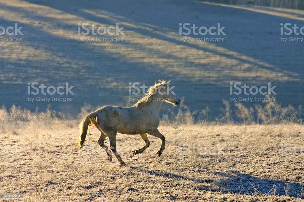 gallop color royalty-free stock photo