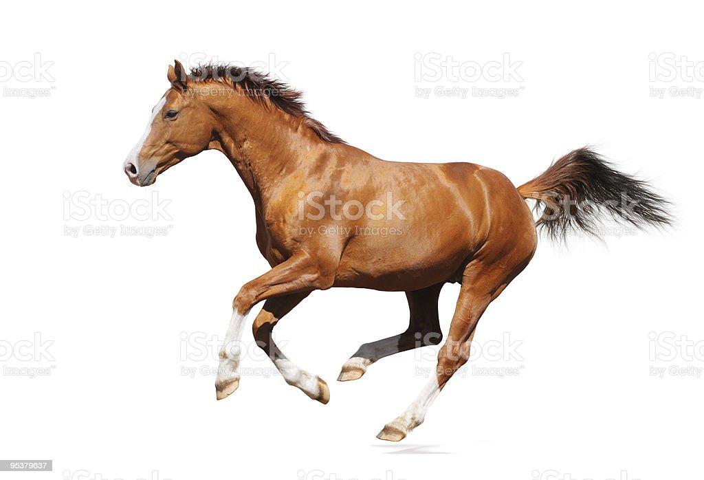 Gallop horse stock photo