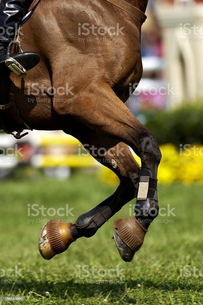 Galloping horse stock photo