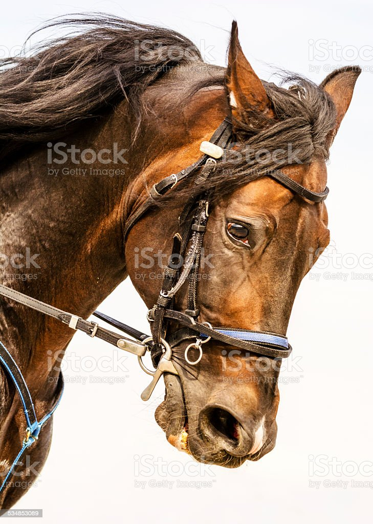 Galloping horse portrait stock photo