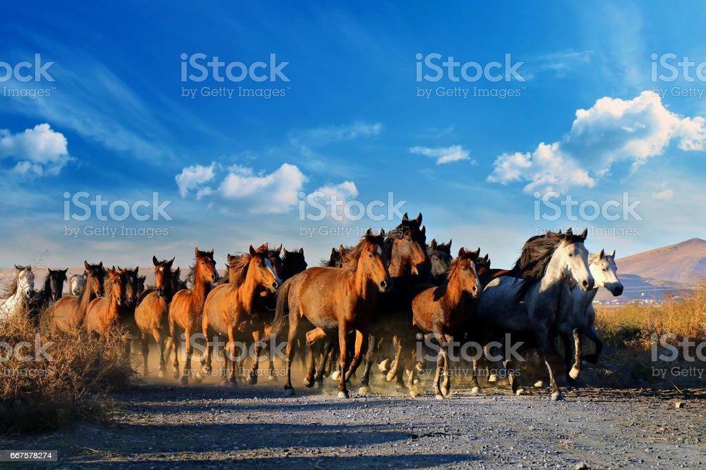 Galloping horses at the nature. Horses running. stock photo