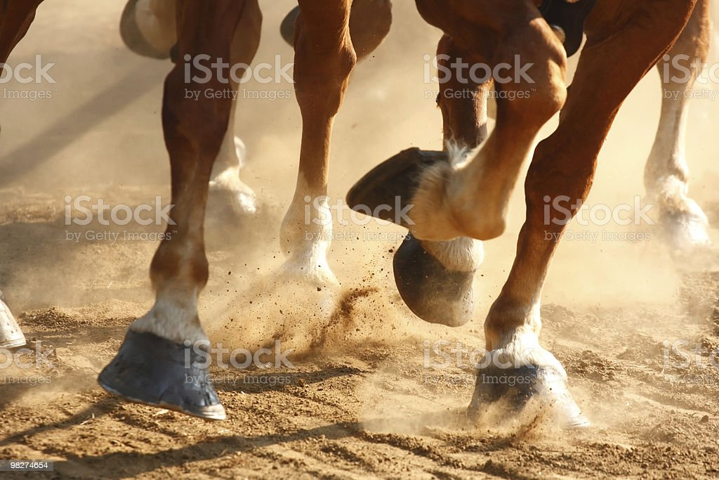 Galloping Horses Hooves stock photo