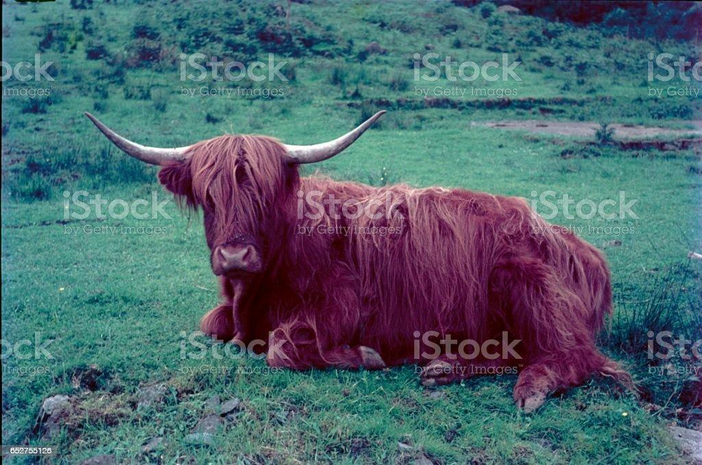 Galloway stock photo