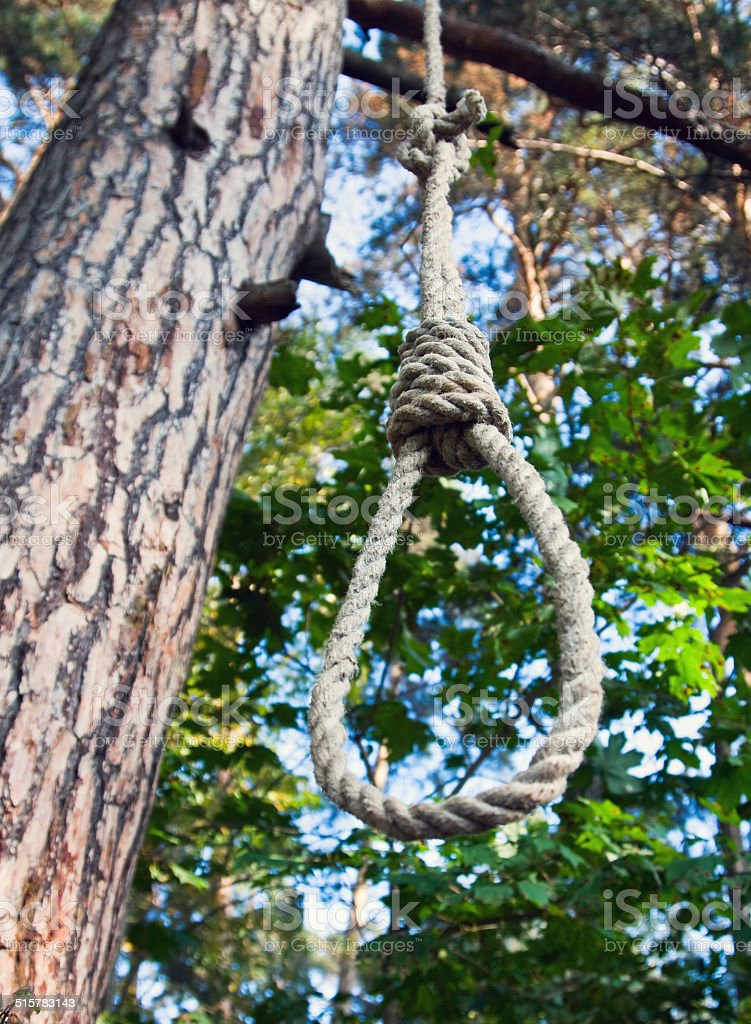 gallows on a tree stock photo
