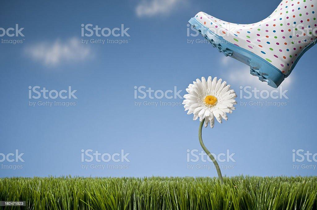 Galosh Stepping On Gerbera Daisy royalty-free stock photo