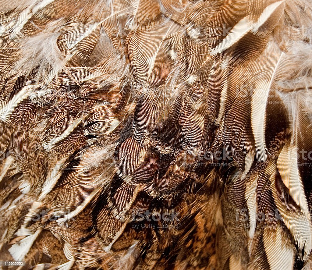 Gamebird Feathers- Close-up royalty-free stock photo