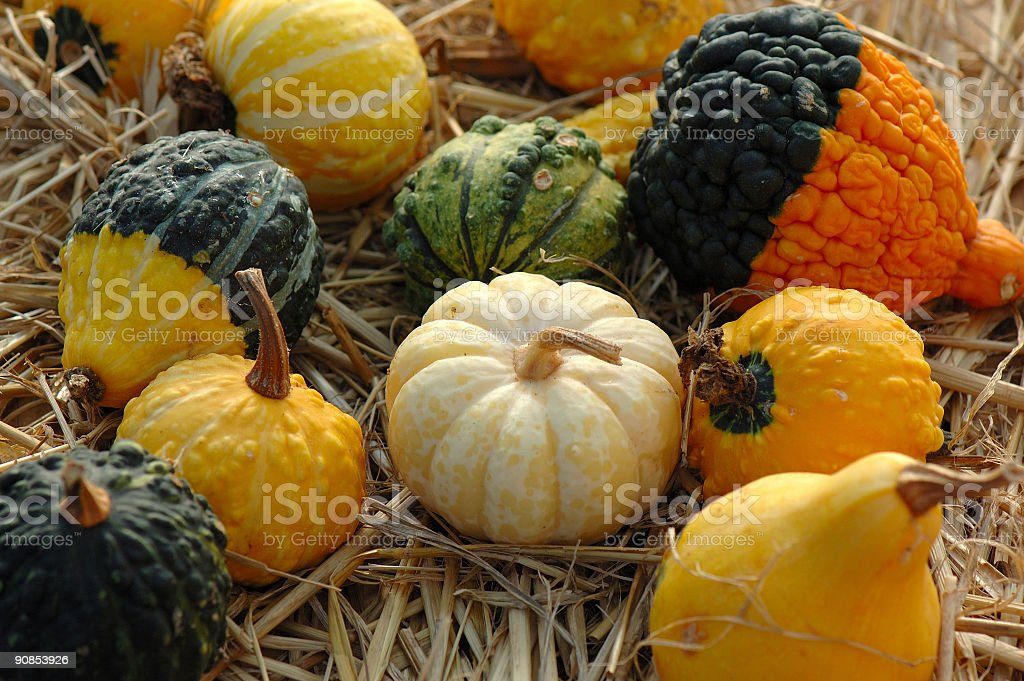 gang of gourds stock photo