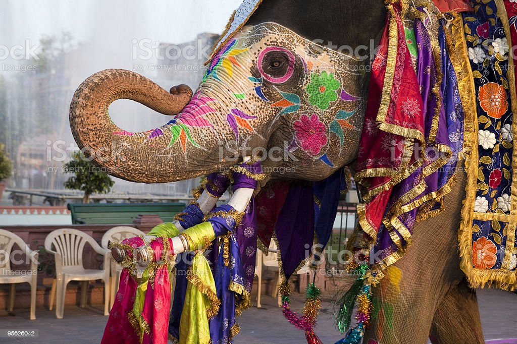Gangaur festival elephant in Jaipur, India stock photo