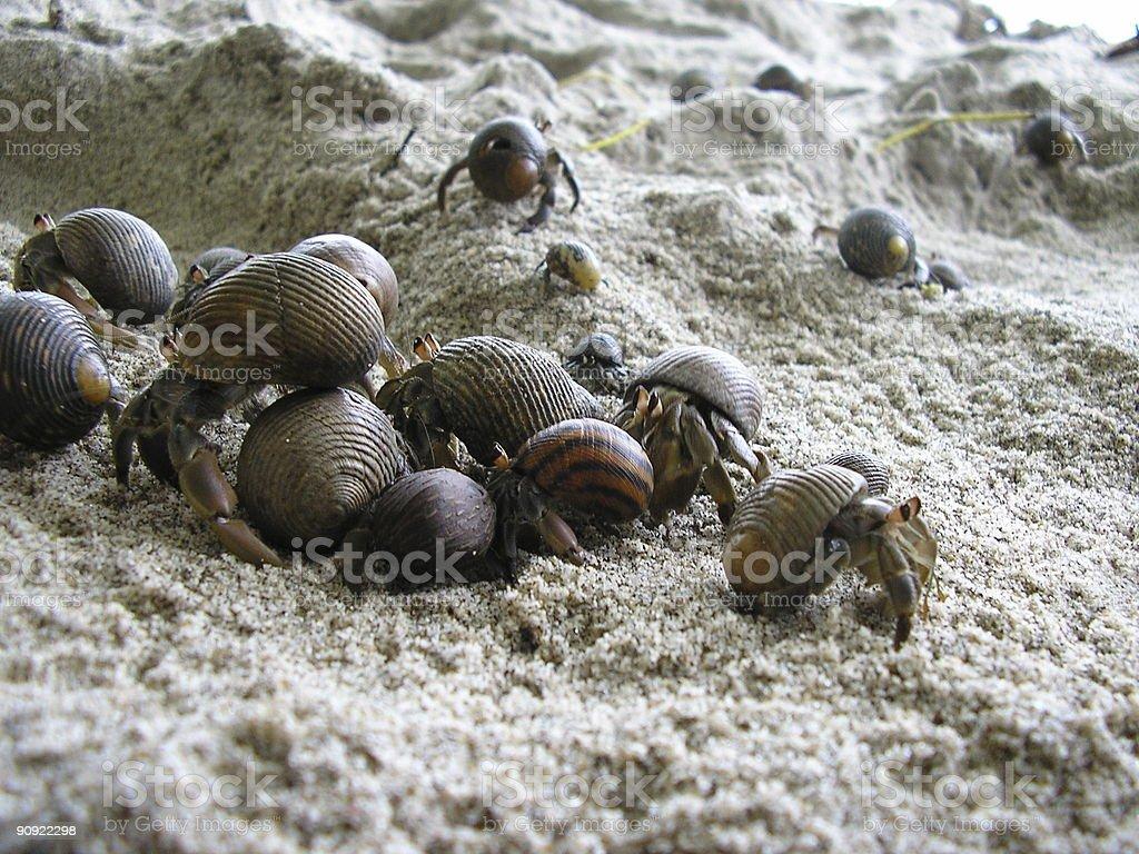 Gangaz of crabs royalty-free stock photo