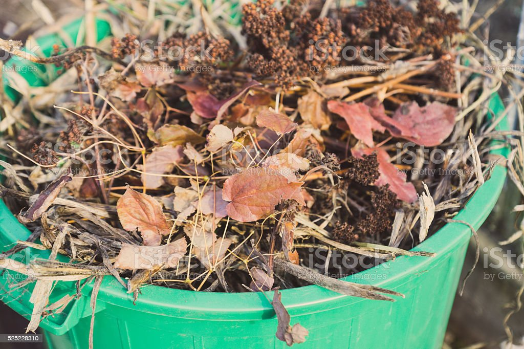 Garbage can full of leaves stock photo