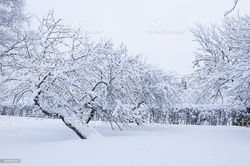 Garden and apple trees covered in snow royalty-free stock photo