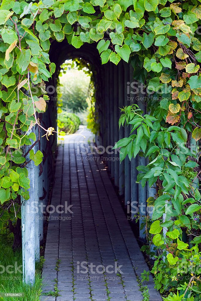 Garden arch covered with leaves stock photo