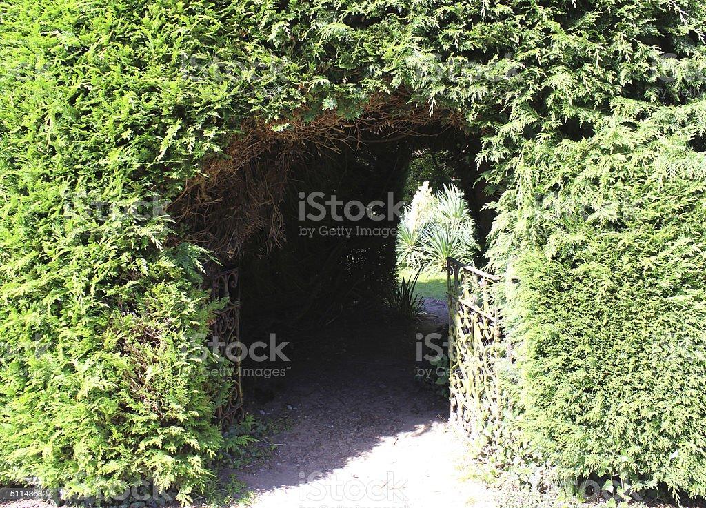 Garden arch, leylandii hedge / leyland cypress conifer trees, hidden garden stock photo
