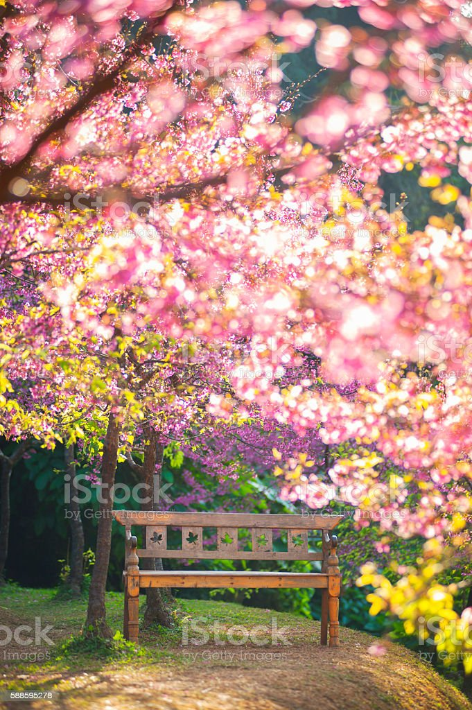 garden bench under the Pink sakura, blur style stock photo
