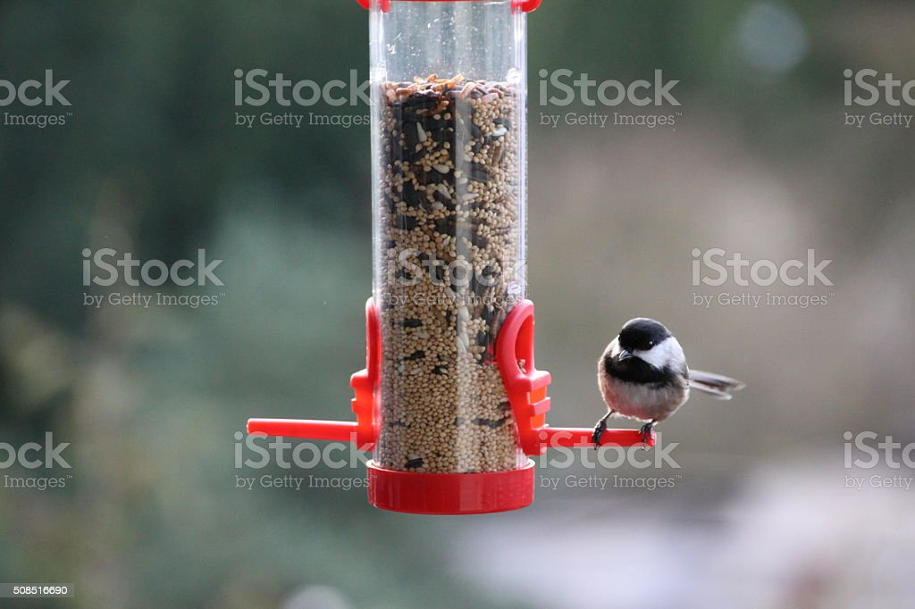 Garden Birdfeeder stock photo