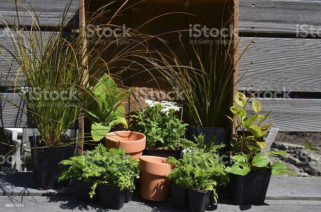 Garden Bliss royalty-free stock photo