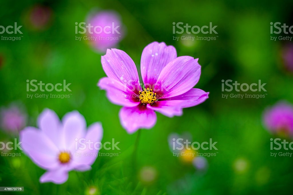 Garden border filled with colourful wild flowers stock photo