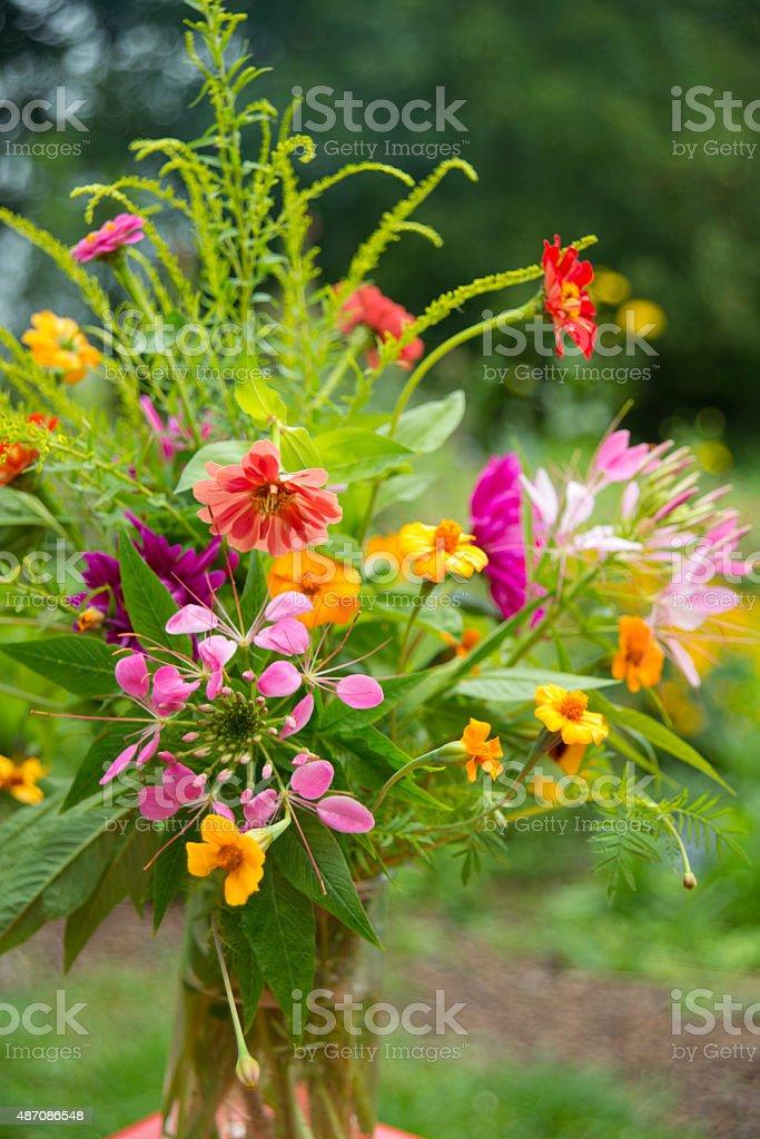 garden bouquet annuals stock photo
