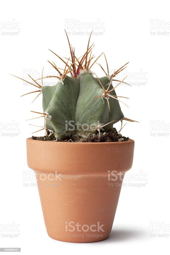 Garden: Cactus royalty-free stock photo