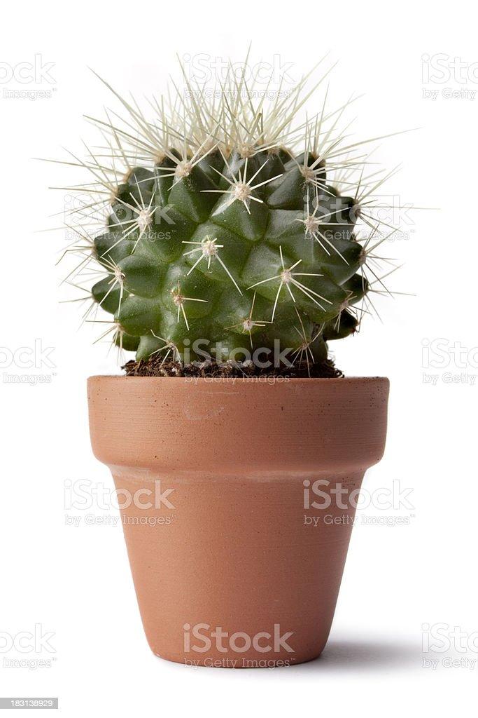 Garden: Cactus stock photo