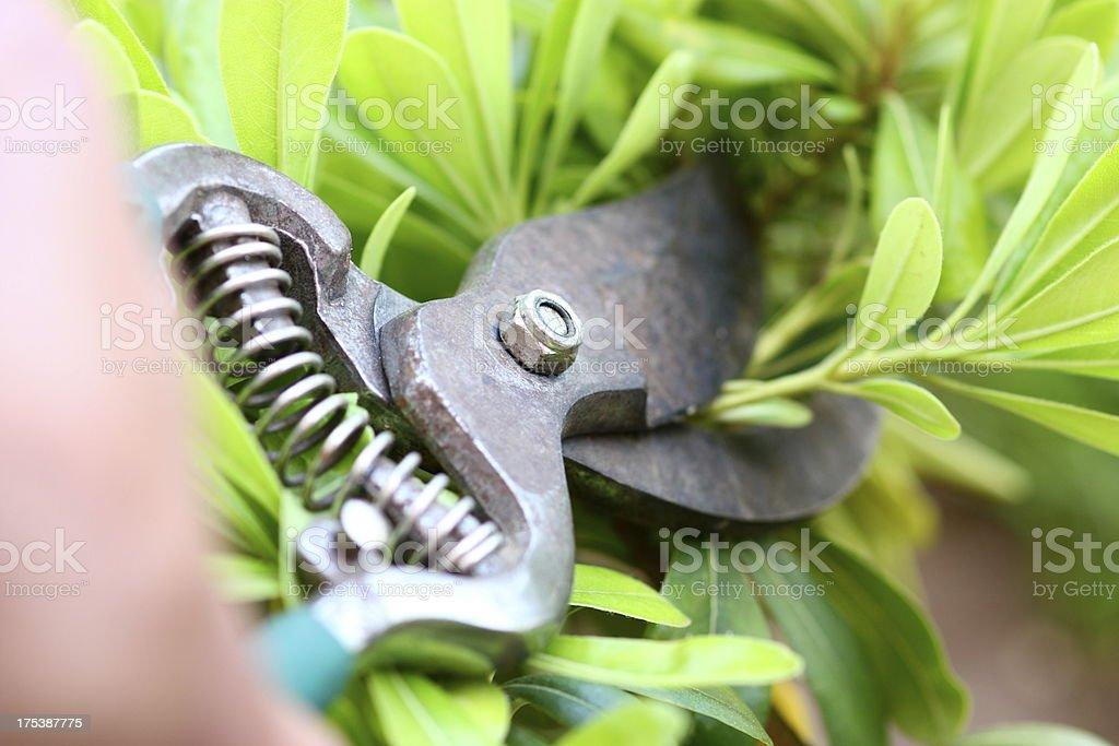 Garden care royalty-free stock photo