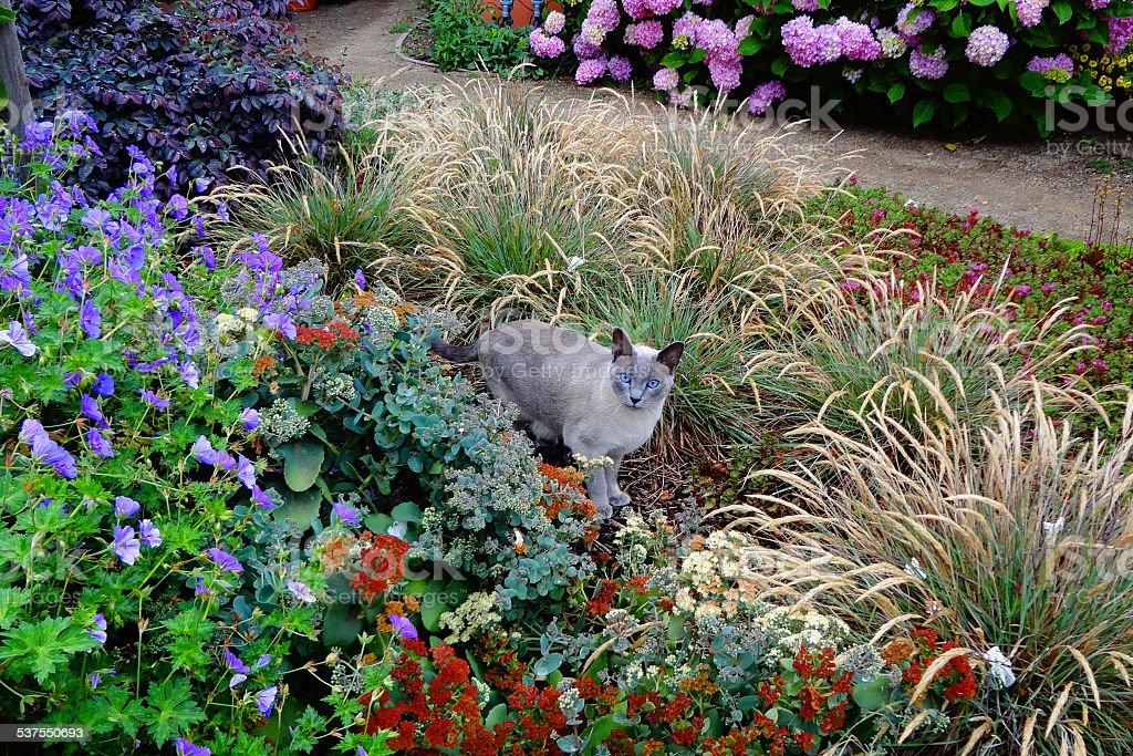 Garden Cat stock photo