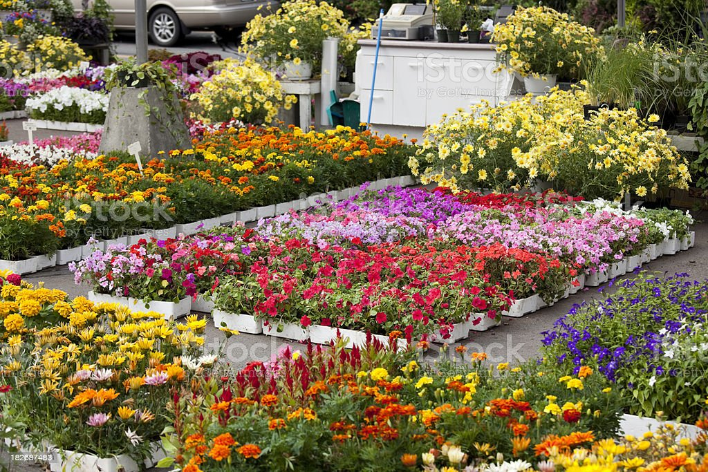 Garden Center and Plant Nursery with Flowers for Spring Gardening royalty-free stock photo