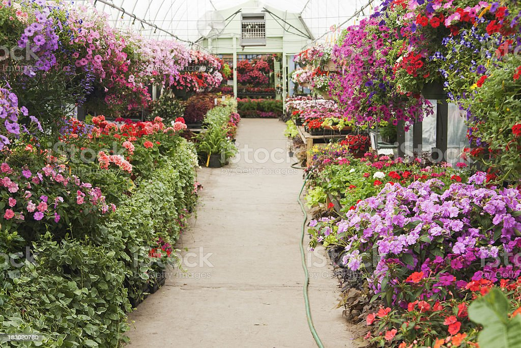 Garden Center Annuals Flower Planters, Hanging Baskets Display in Greenhouse stock photo
