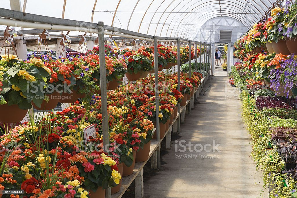 Garden Center Greenhouse of Summer Retail Flower Shop, Plant Store royalty-free stock photo