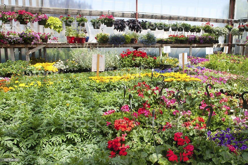 Garden Center Greenhouse stock photo