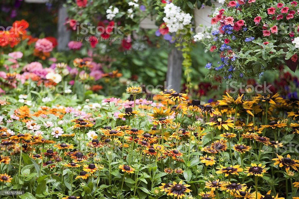 Garden Center Plant Nursery with Fresh Spring Flowers royalty-free stock photo