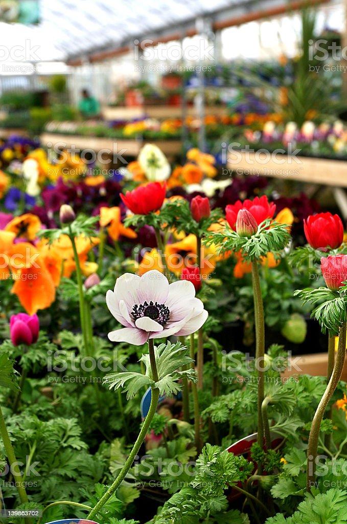 Garden Centre Color royalty-free stock photo