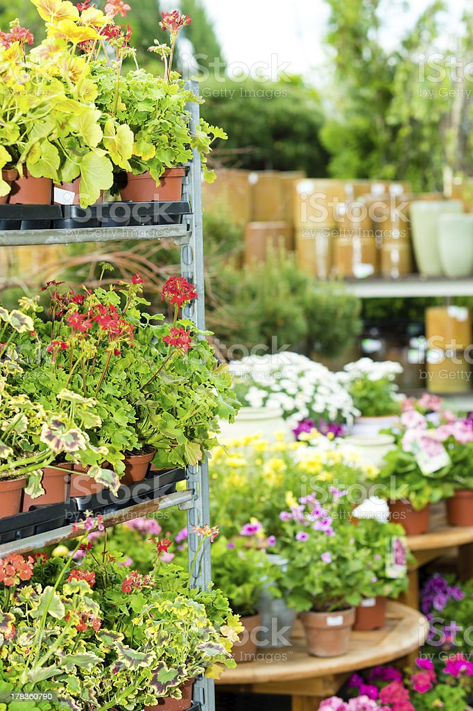Garden centre green house with potted flowers royalty-free stock photo