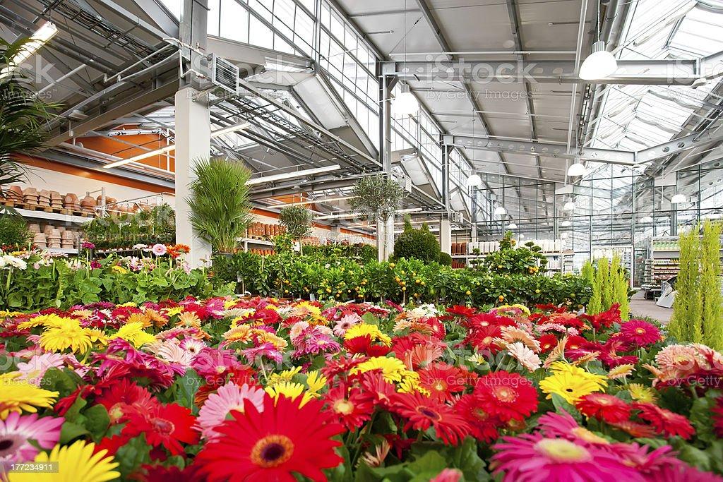 Garden centre stock photo