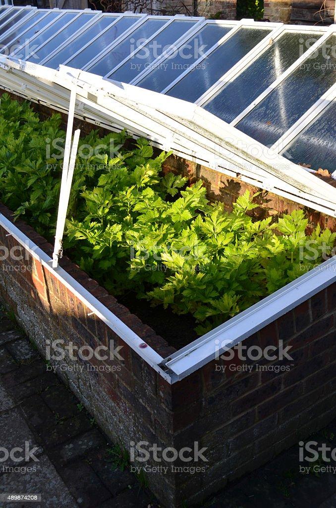 Garden cloche stock photo